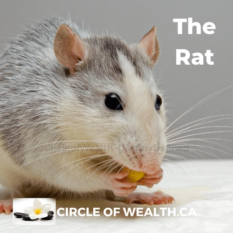 RAT (1)