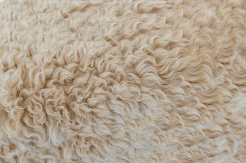 Gorgeous Luxurious Feeling Rug Under Toes