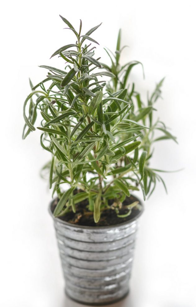 Thyme is a great smell